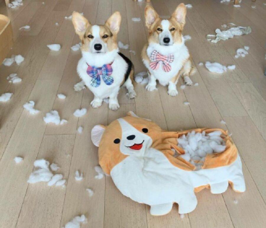 cani non vogliono falsi amici
