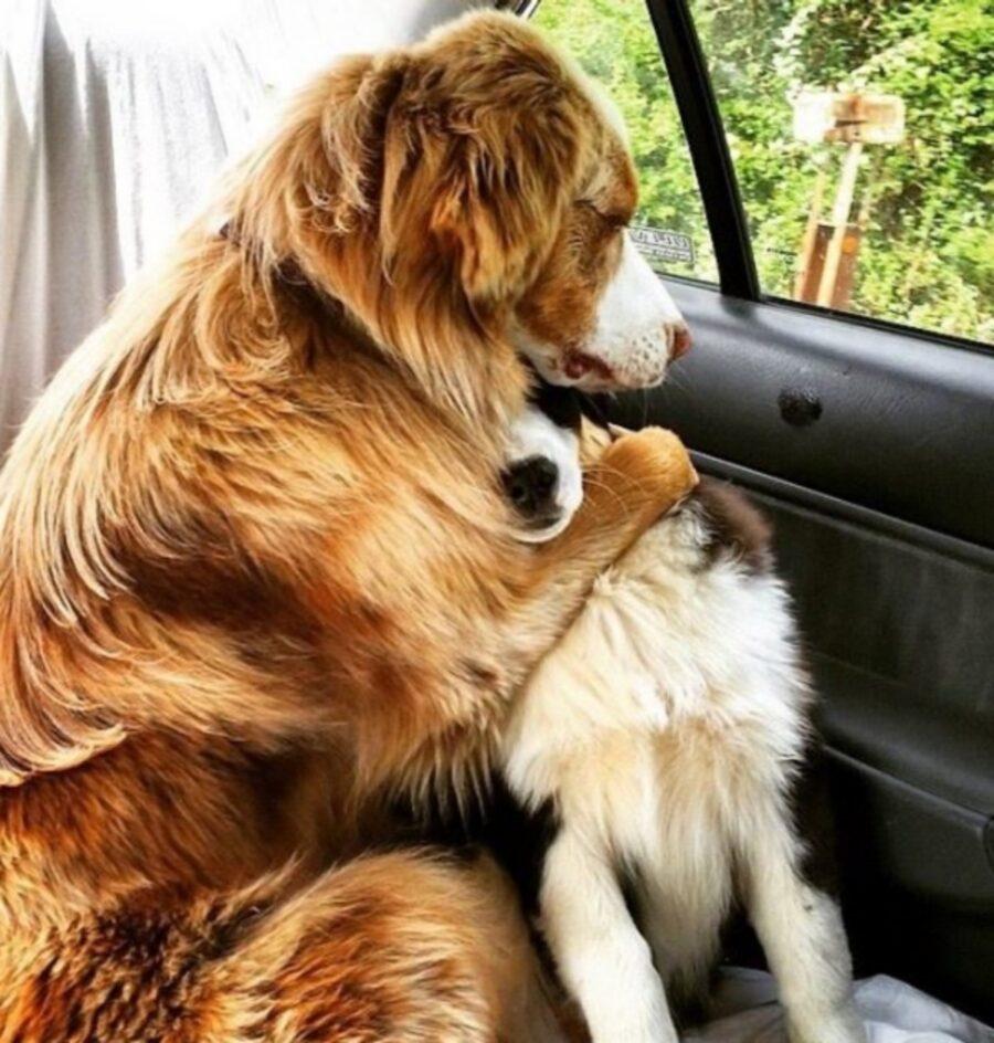 cani dolci abbraccio