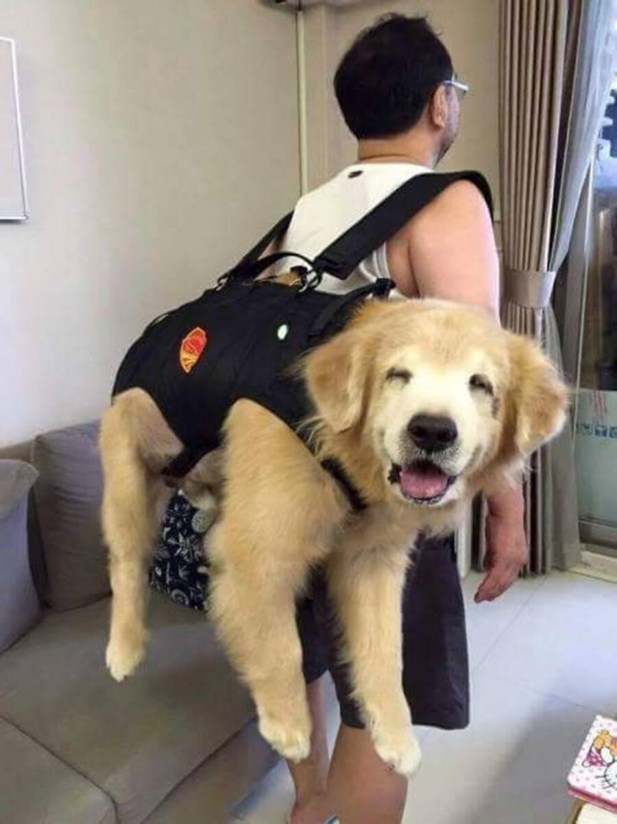 cane sorriso buffo