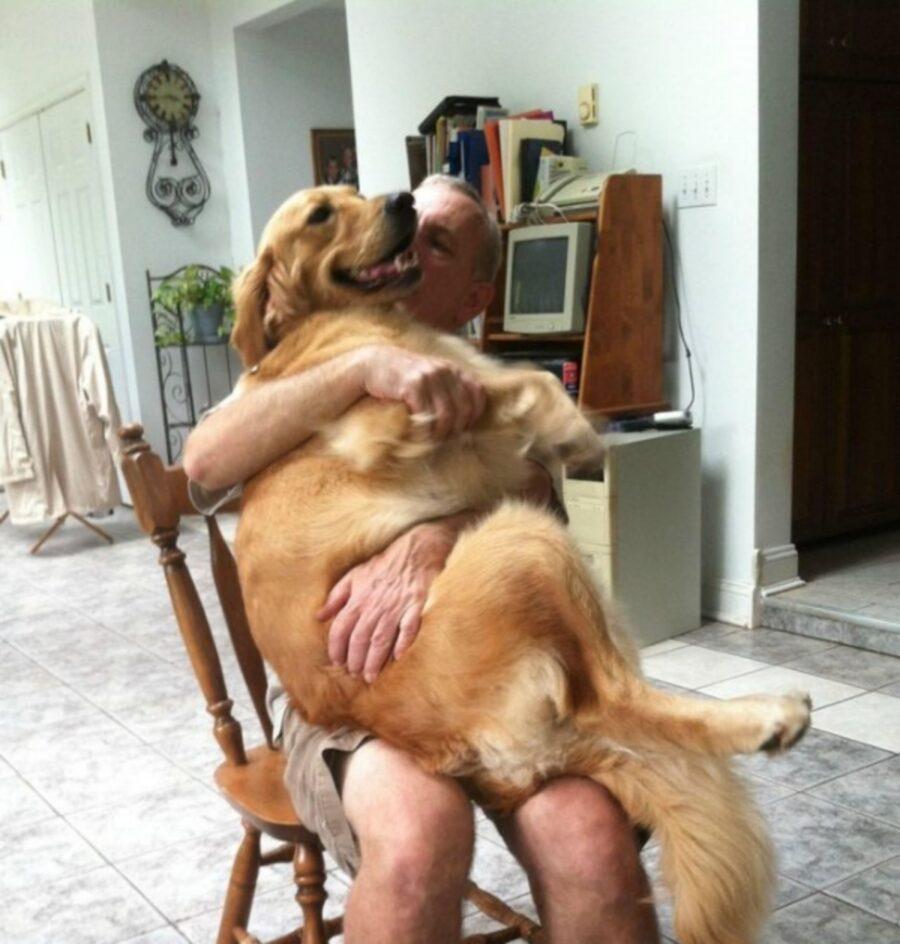 cucciolo papà seduto