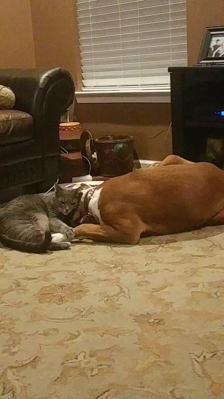 gatto cane amici