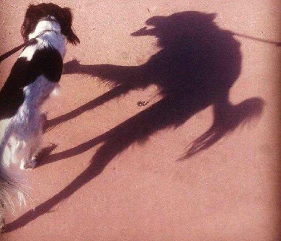 cane ombra lupo mannaro