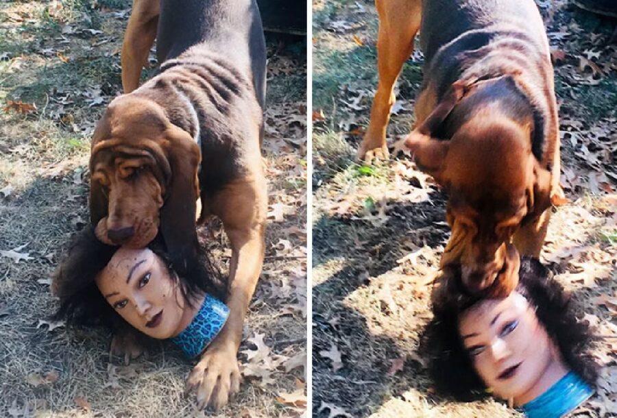 cane testa manichino bocca