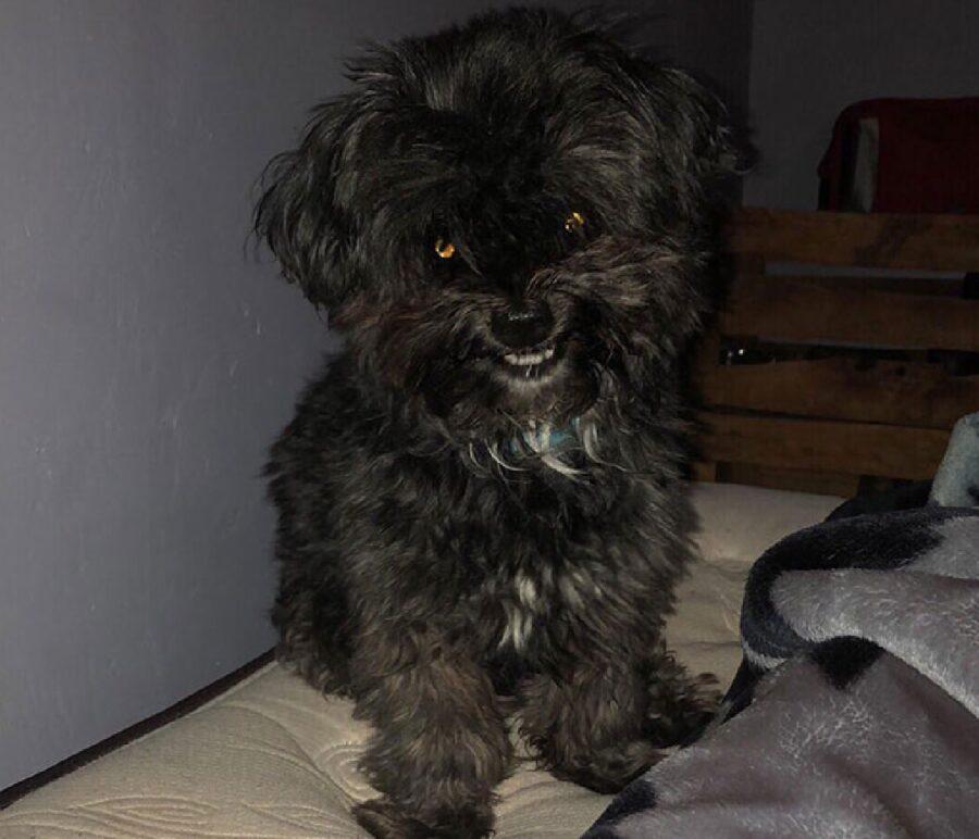 cane cattivo sguardo malefico
