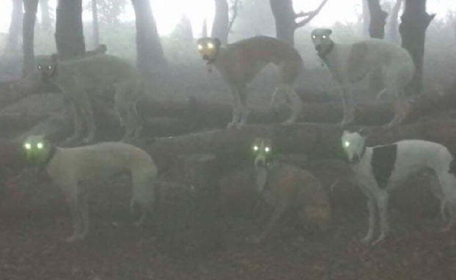 cani gruppo foschia foresta
