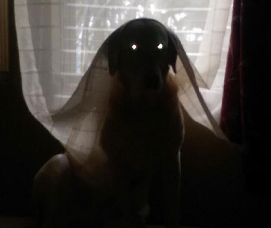cane tenda occhi luminosi