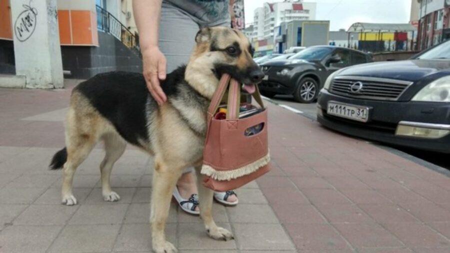 cane dolce borsa