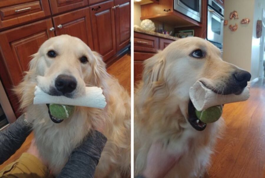 cane giochi bocca