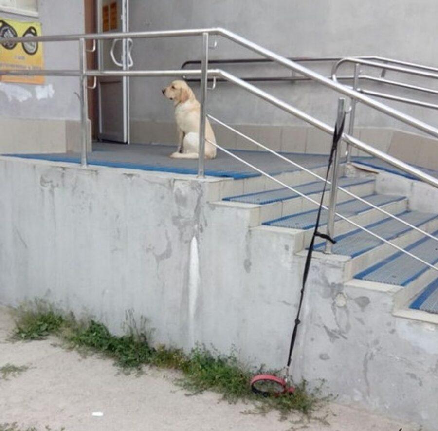cane attesa padrone