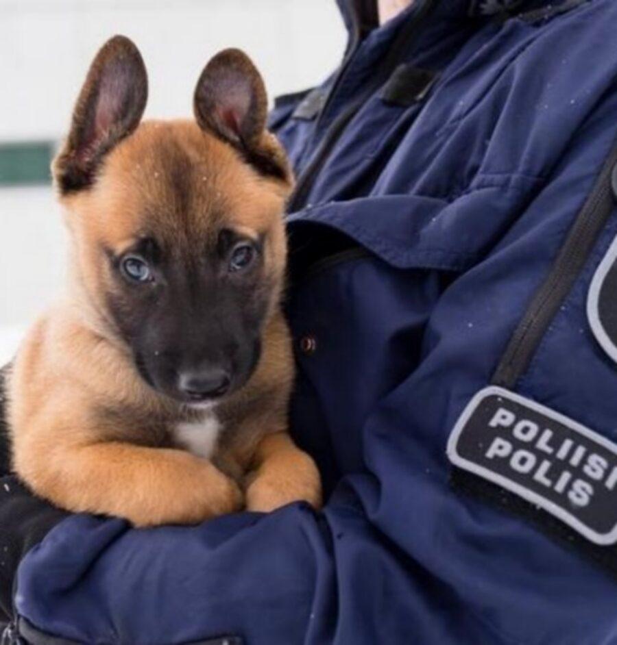 cane polizia divisa