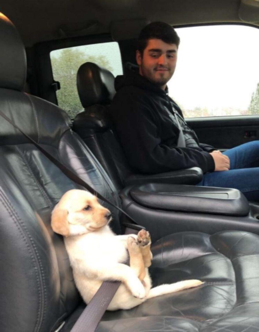 cagnolino auto viaggio