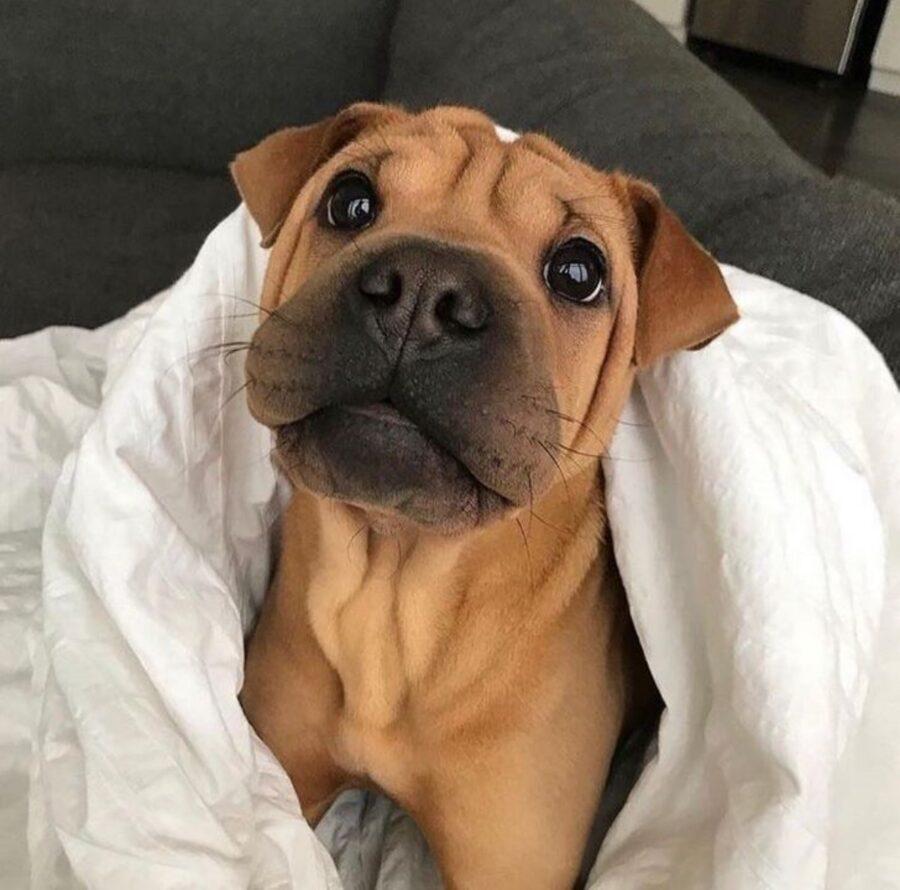 peloso cane asciugamano