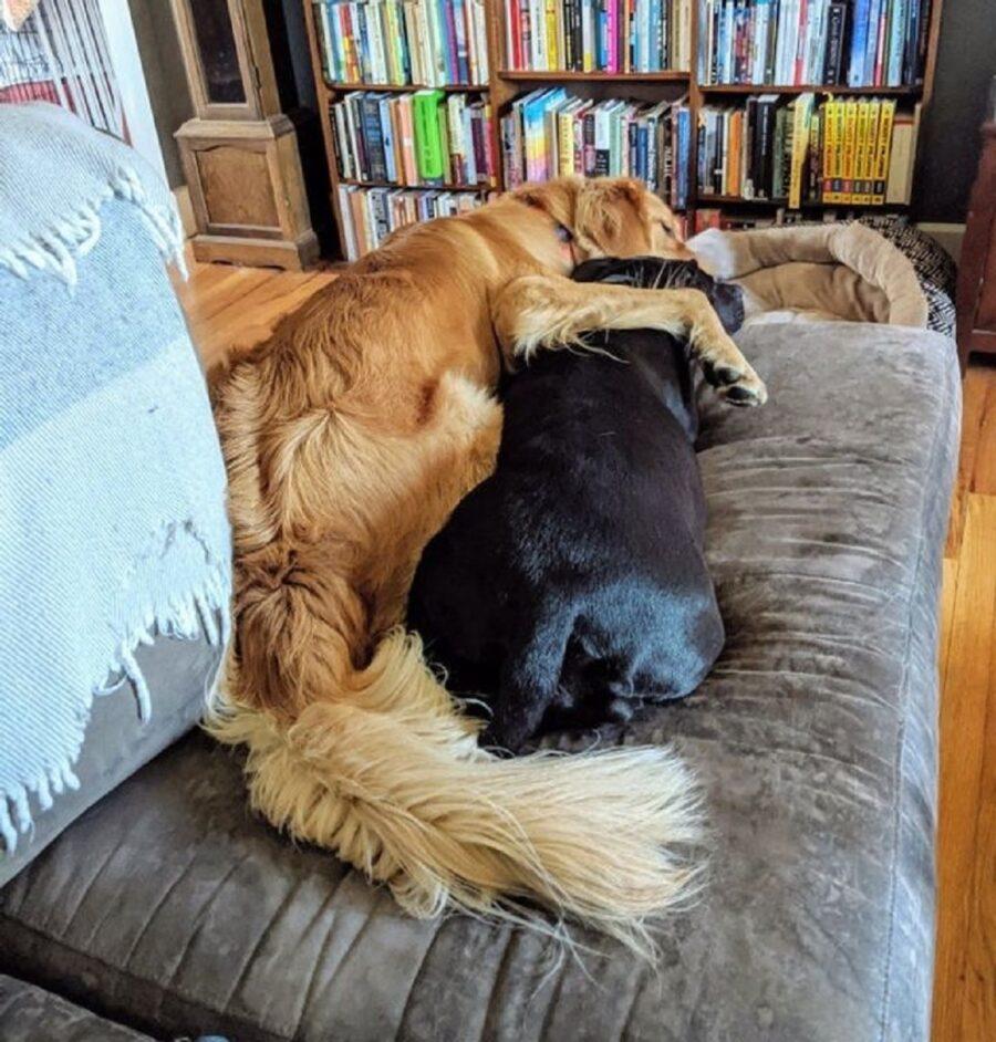 cani abbraccio speciale