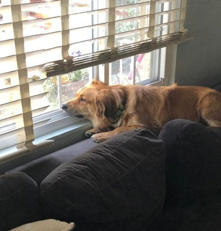 cane finestra tapparella