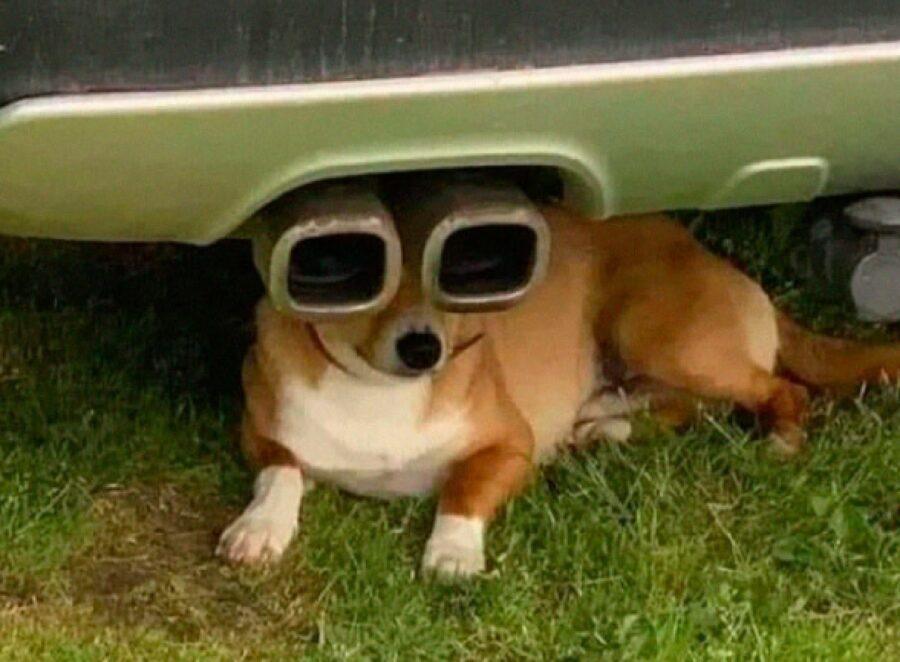 cane marmitta come occhiali