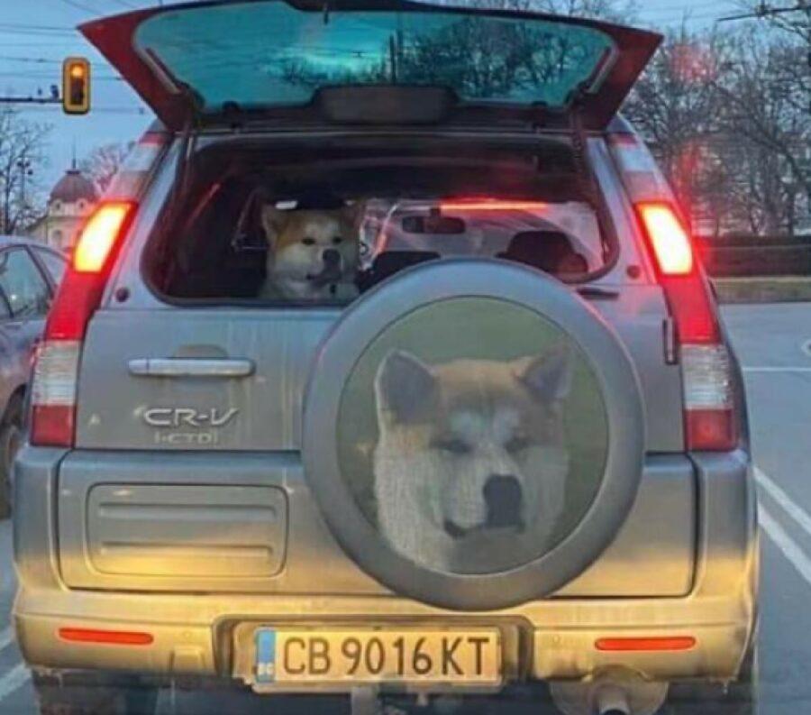 cane dentro auto immagine cerchione