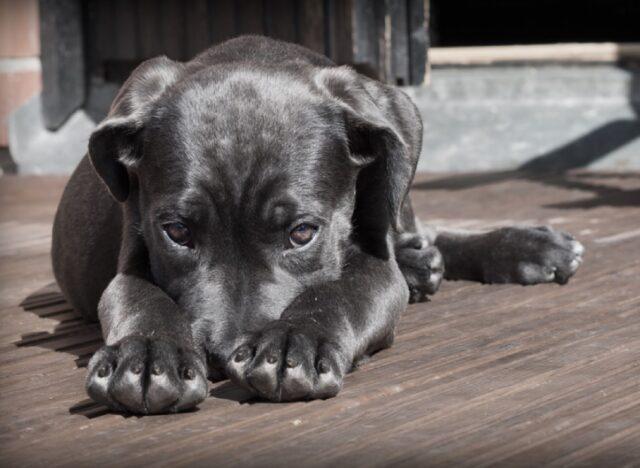 cani che vogliono essere carini ma fanno paura