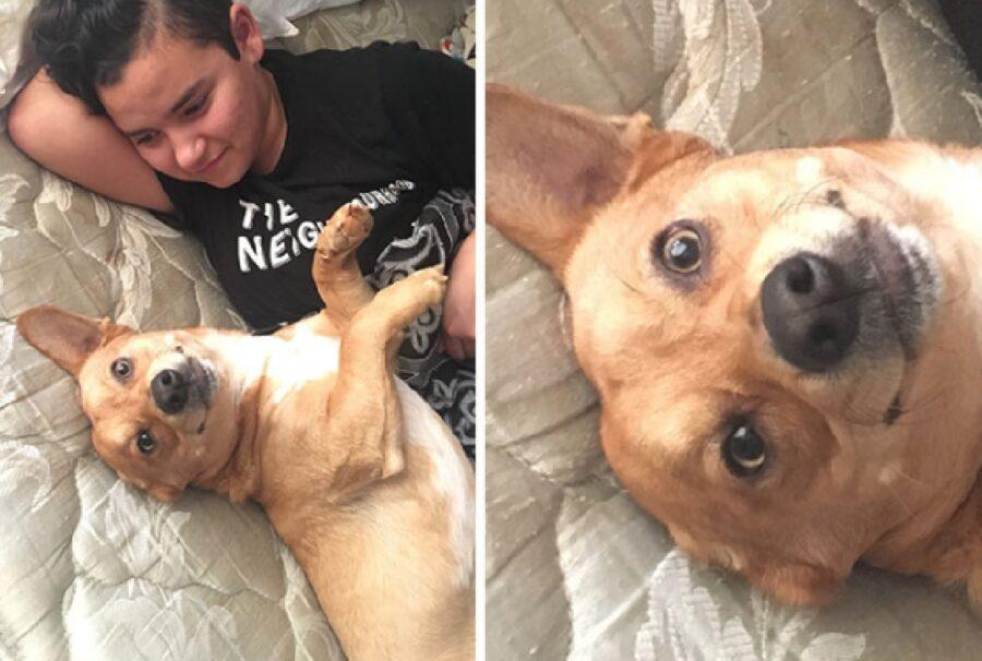 cane felice vicino piccolo proprietario