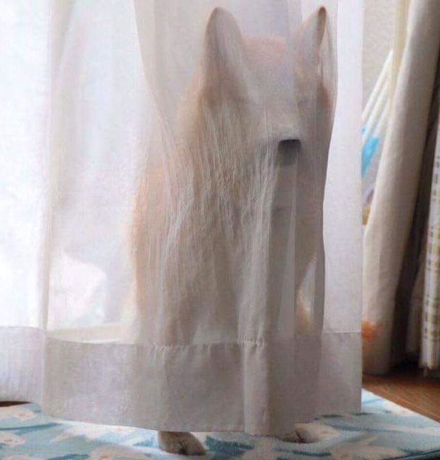cane tenda fantasma