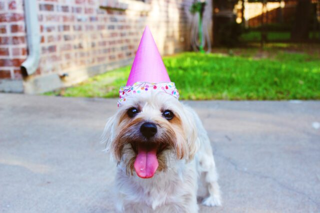 cucciolo compleanno festa