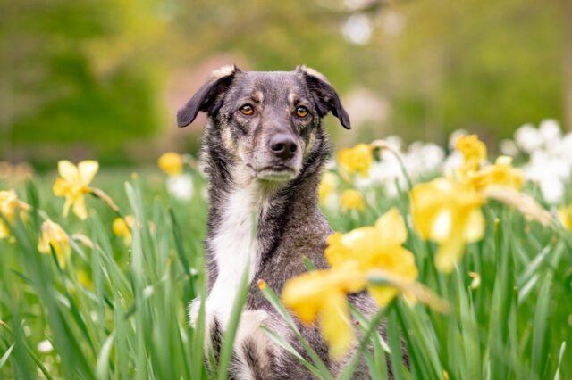 cane natura fiori