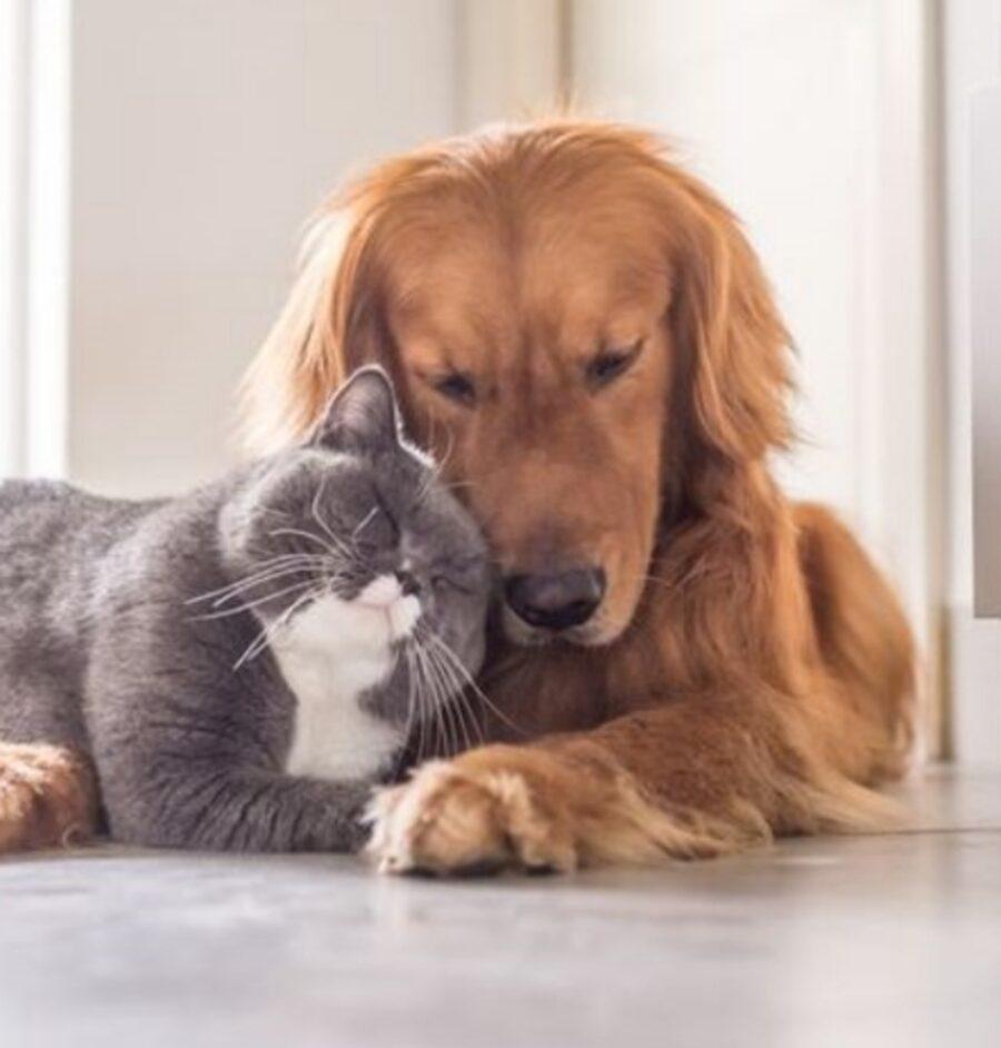 gatto cane amicizia