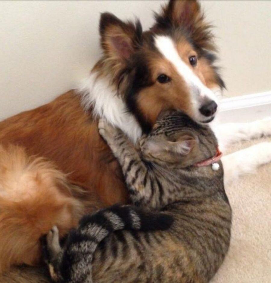micio abbraccia cane