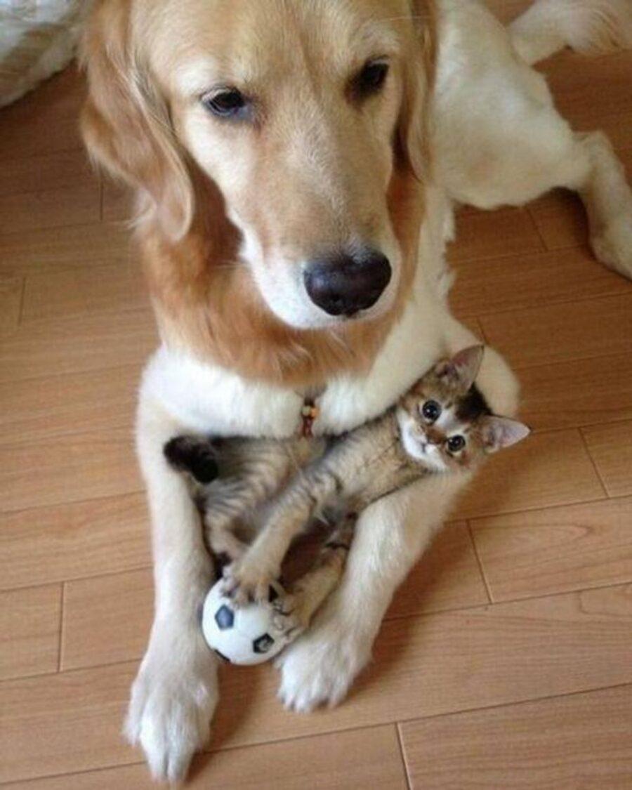 cane zampe gatto