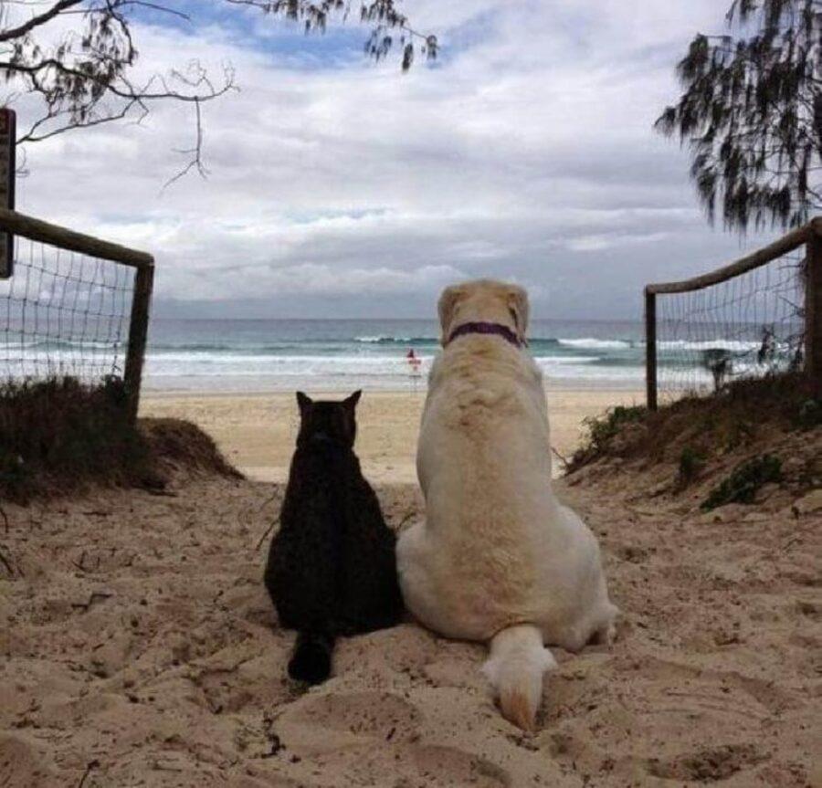 cane mare acqua