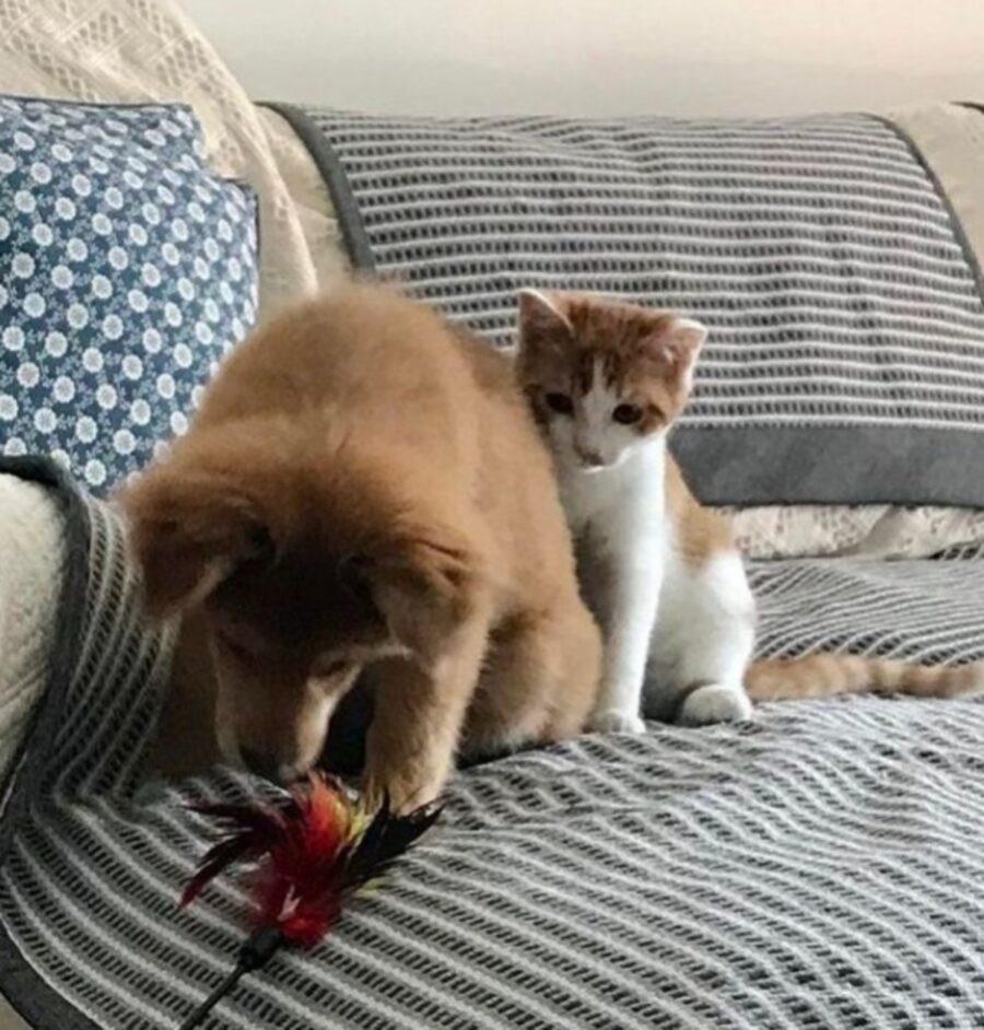 gatto gioco cane