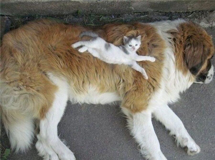 cane amico piccolo