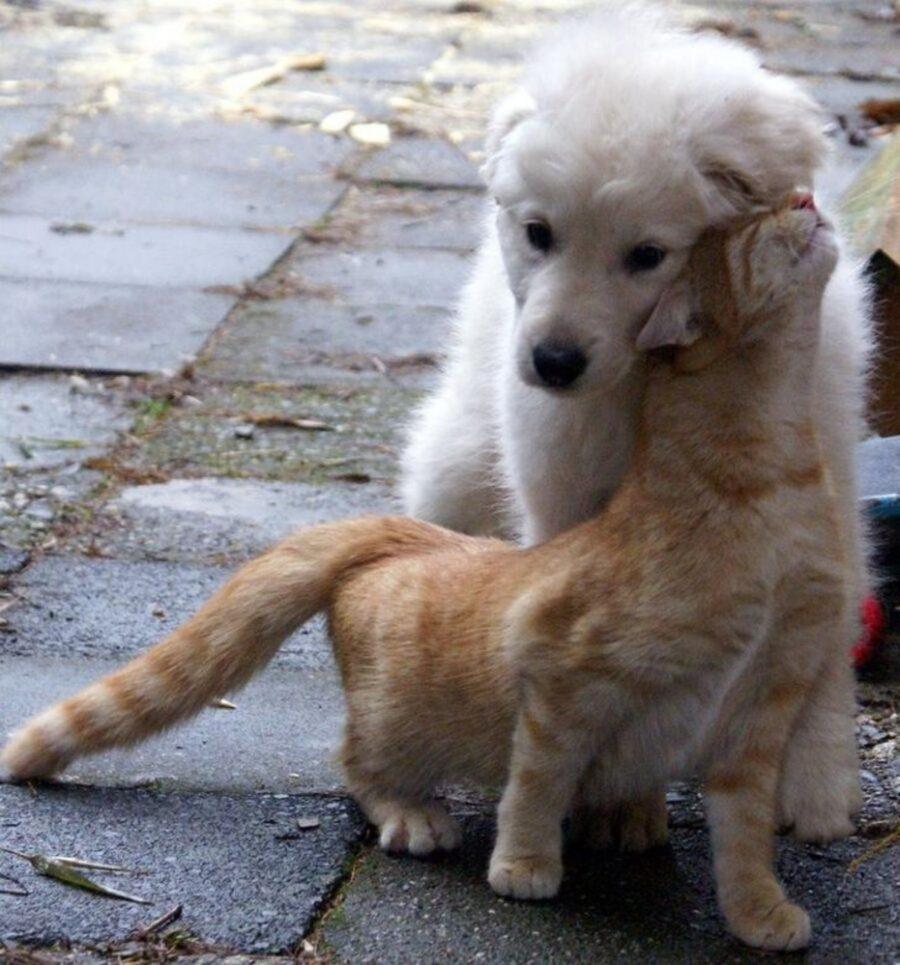 cane bianco gatto