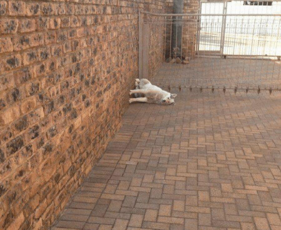 cane seduto in modo strano