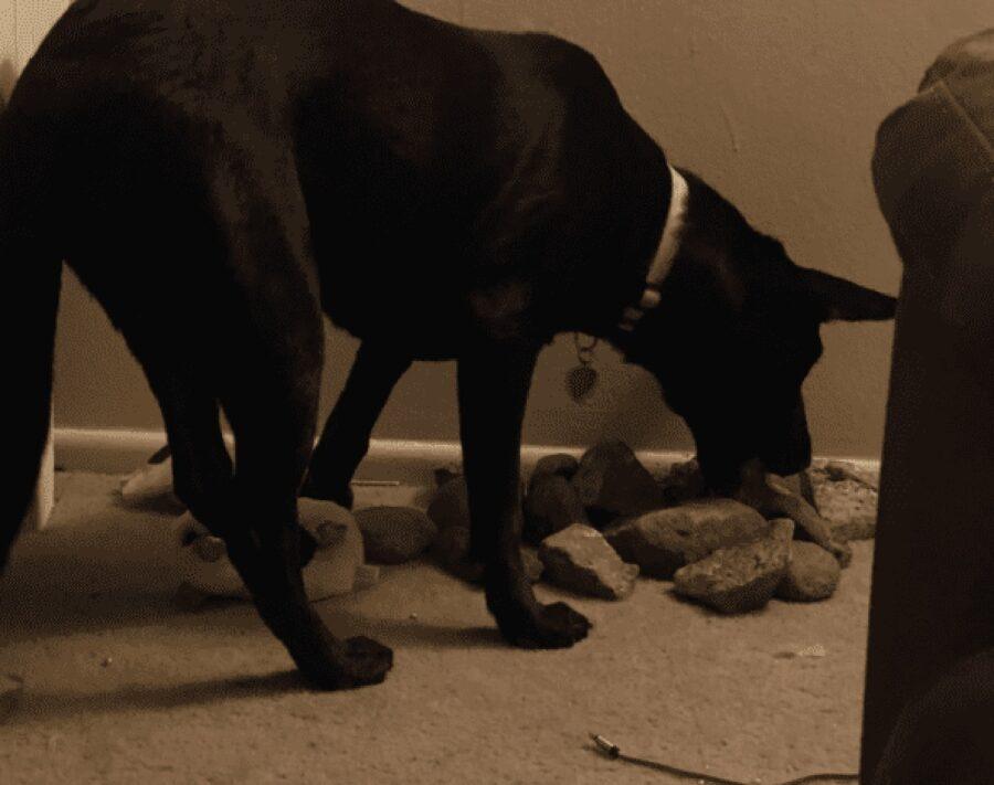 cane nero mangia pietre