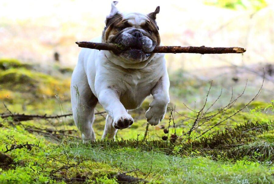 cane gioca con bastone di legno