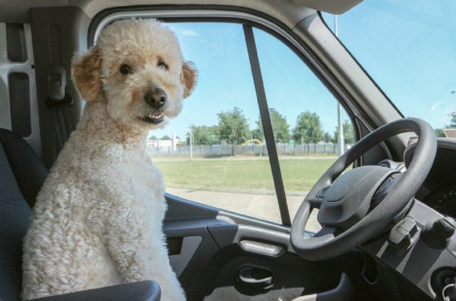 cane scuola di guida