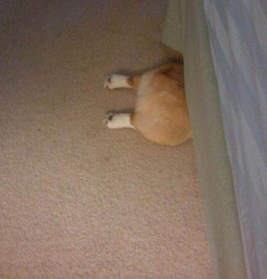 cucciolo zampe divano
