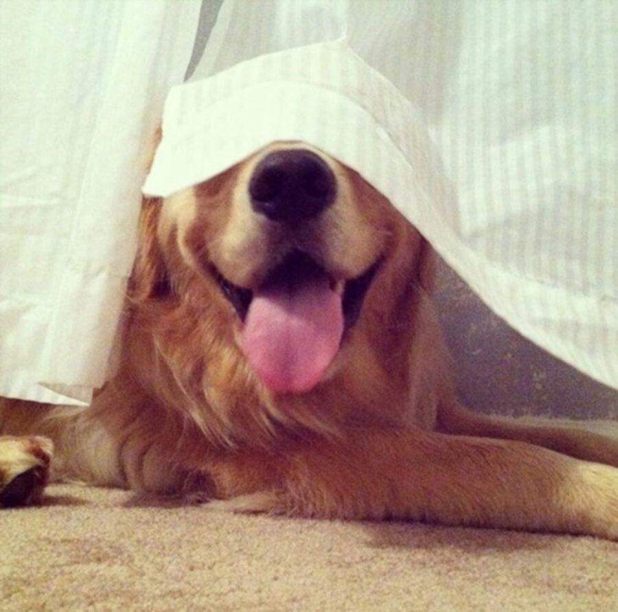 cane sorriso lingua