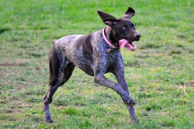 cane buffo corre