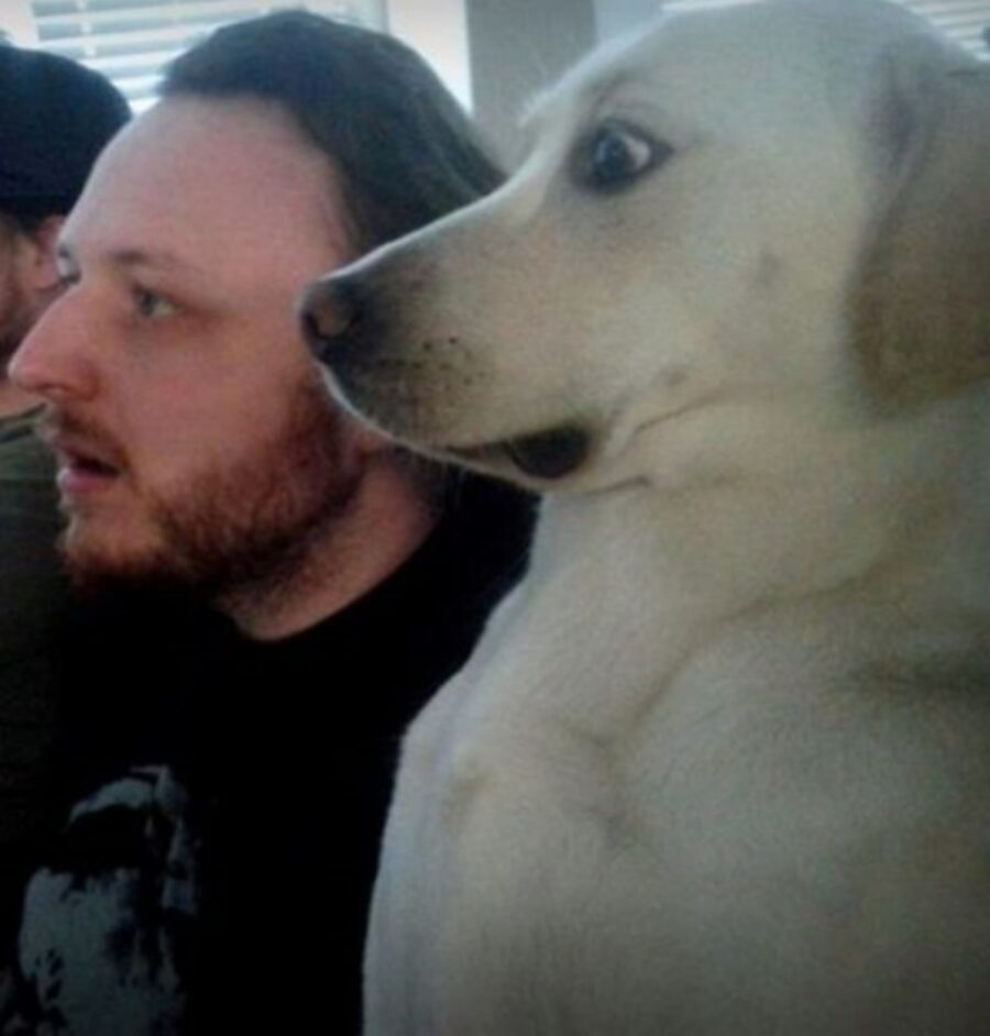 cane espressione esilarante