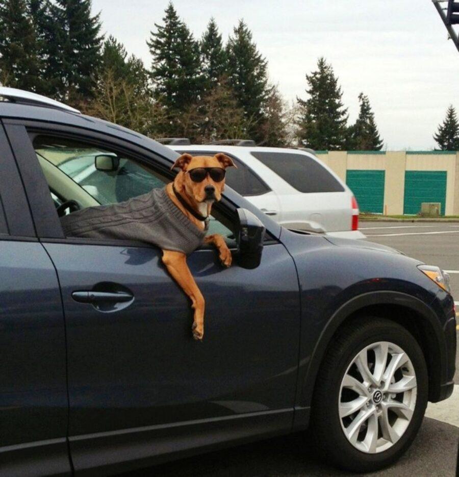 cane auto occhiali