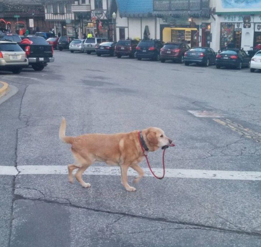 cane spasso guinzaglio
