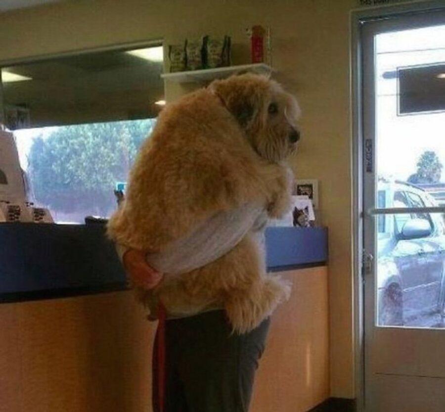 cane paura veterinario
