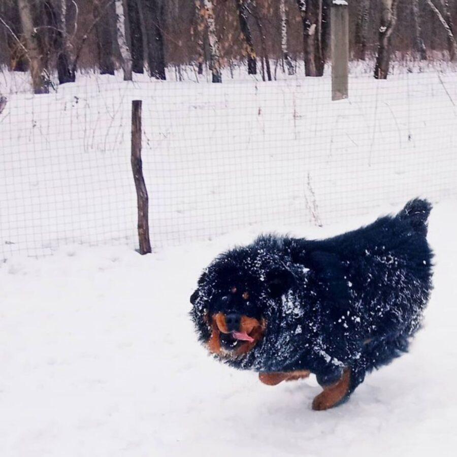 cane felice neve