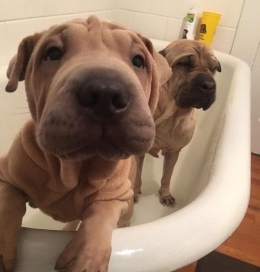 cani bagnetto vasca