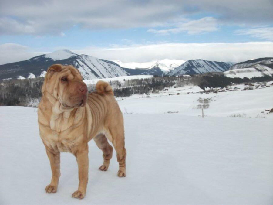 cane neve posa