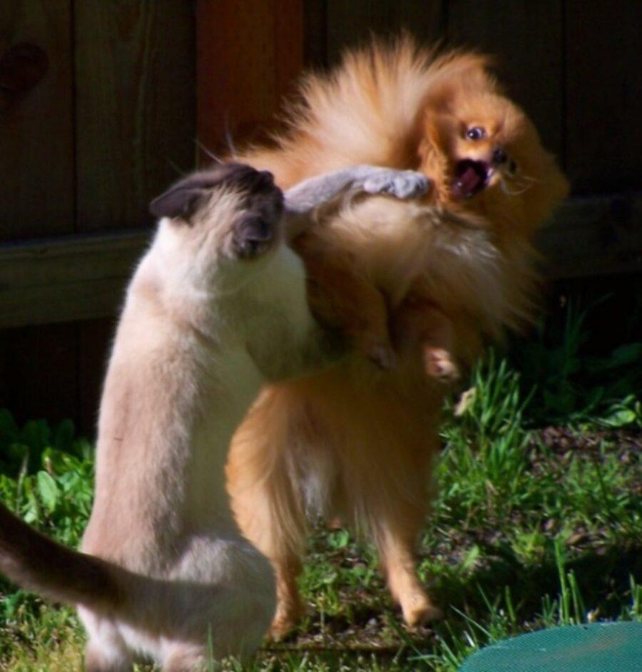 cane gatto lotta