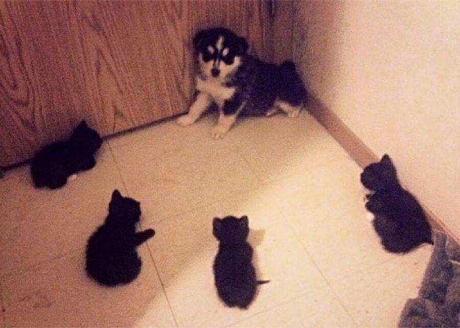 cane accerchiato gatti