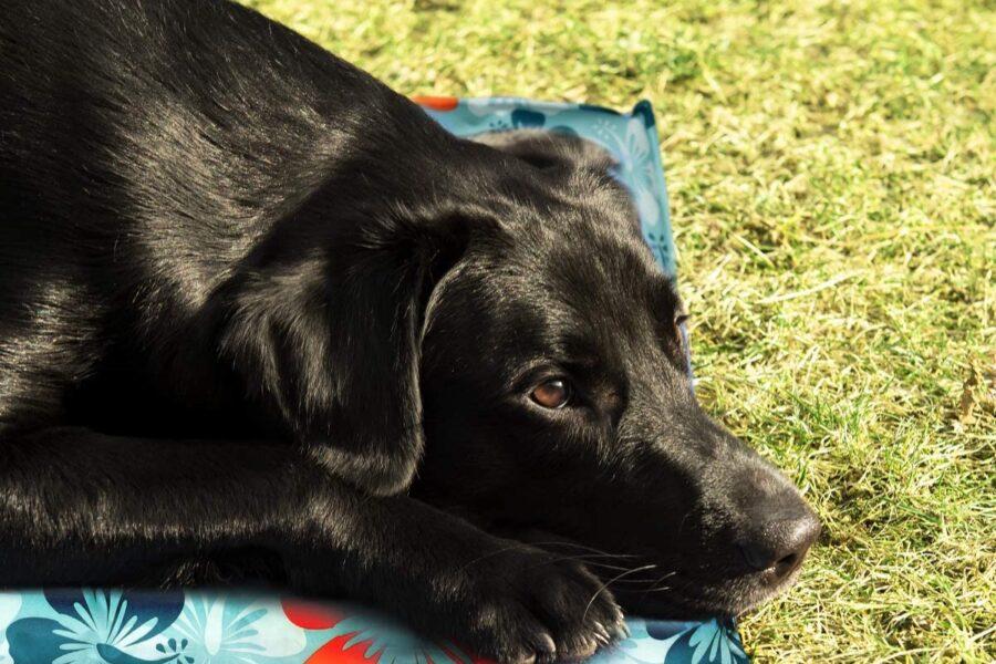 tappetino per cane che rinfresca