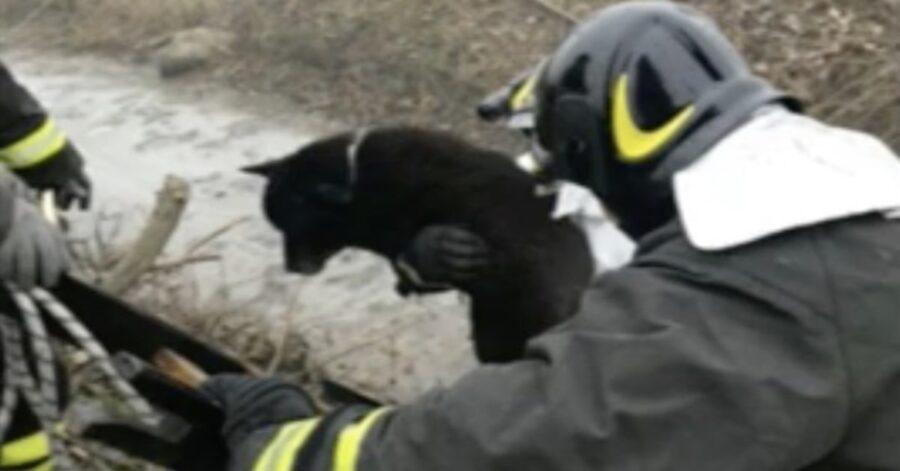 un cane nero viene salvato dai pompieri